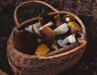 Czy grzyby są ciężkostrawne? Jak je przyrządzać, żeby sobie nie zaszkodzić