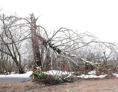 Rodziny ofiar katastrofy nie chcą pomnika w Smoleńsku