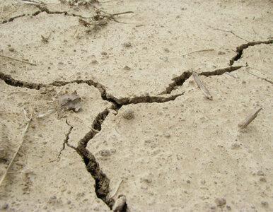 Trzęsienie na Tajwanie. Ściana świątyni przygniotła kobietę