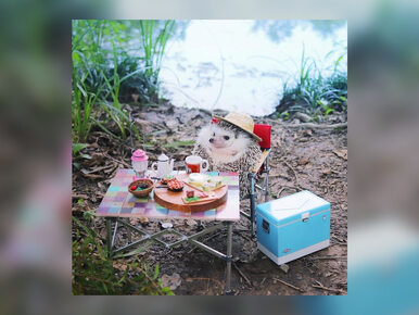 Fotografie małego jeżyka podbiły serca internautów. Zwierzątko m.in....