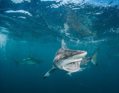 Rekordowa liczba ataków rekinów