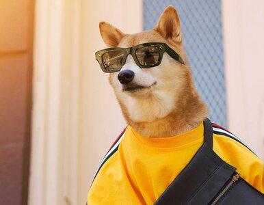 Współpracuje z Nike i jest modelem. Ten pies zarabia nawet 50 tys. zł...