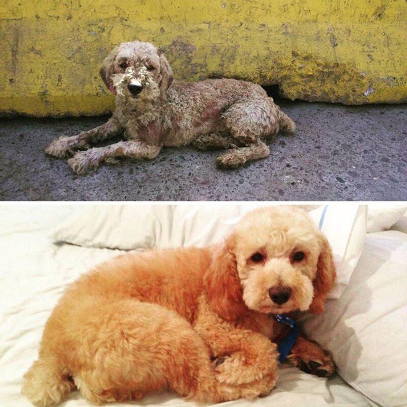 Przed i po metamorfozie