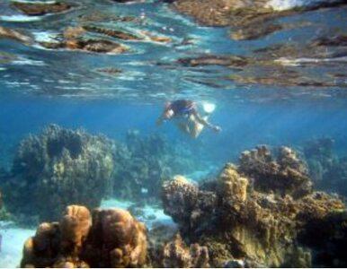 """""""Trzeba powiedzieć prawdę: rafy koralowe już są martwe"""""""