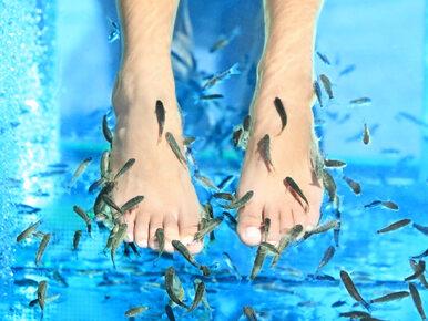 Eksperci: Fish pedicure może przenosić HIV i WZW C