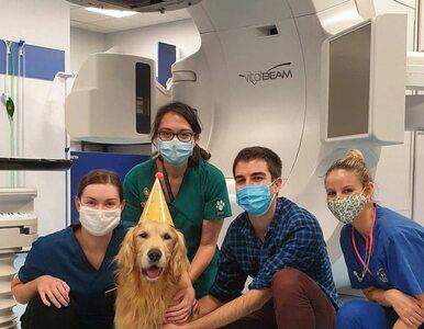 Chorego psa leczono terapią dla ludzi. Tak świętowano jego wyzdrowienie