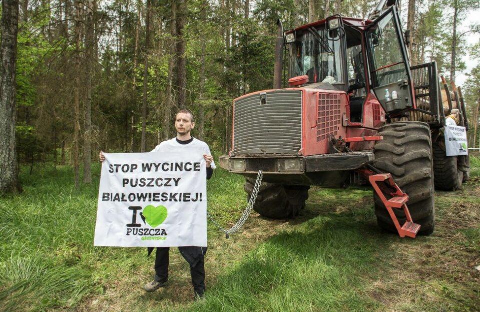 Protest Greenpeace w Puszczy Białowieskiej