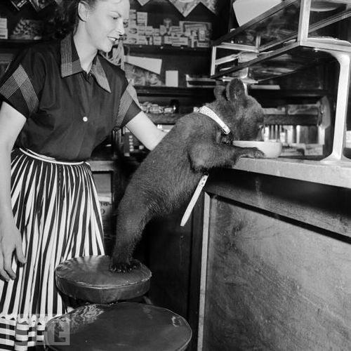 Mały niedźwiedź jedzący miód w kawiarni (1950 r.), fot. epicdash.com