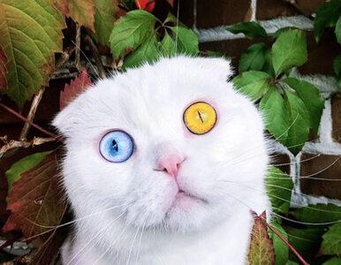Fascynujący czy przerażający? Oczy kota Josepha z pewnością zrobią z...
