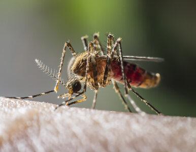 Czeka nas atak zmutowanych komarów