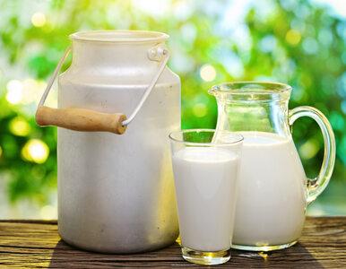 Afera w znanej mleczarni. Rozrabiali mleko z wodą, straty liczone w...