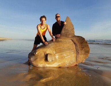 Gigantyczny samogłów wyrzucony na plażę
