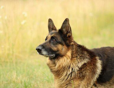 W ramach resocjalizacji szkolą psy. Dzięki czworonogom wychodzą na prostą