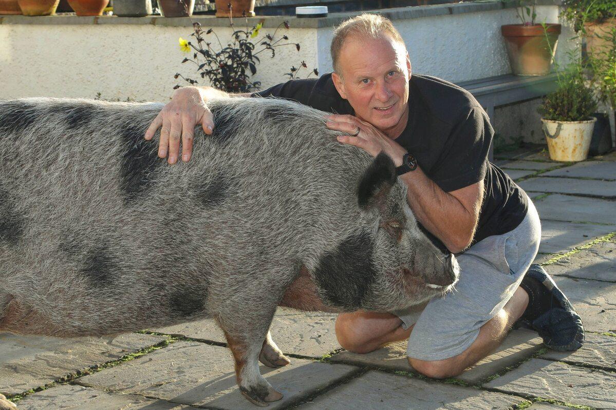 Świnka Grace i jej właściciel