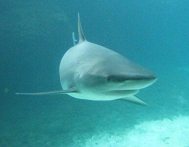 Pogryzł go rekin. Wcześniej poraził go piorun
