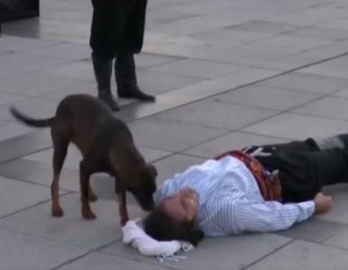 Aktor grał ciężko ranną postać. To, co zrobił bezpański pies, zaskoczyło...