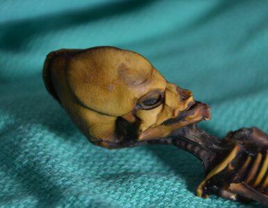 Kosmita czy człowiek? Szkielet z pustyni Atakama