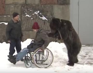 Niedźwiedź najlepszym przyjacielem człowieka? W sieci pojawiło się...