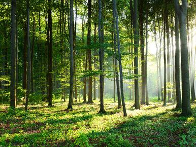 Pomorskie. Trzyletnia dziewczynka znaleziona w lesie, mogła spędzić tam...