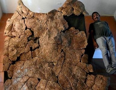 3 metry długości i nawet 2 tony wagi. Naukowcy odnaleźli karapaks...