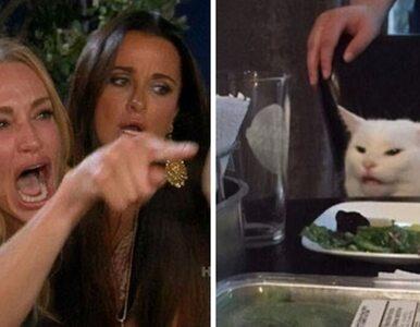 Namierzyliśmy kota z popularnego mema. Zwierzak gardzi warzywami