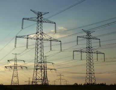 Ceny energii w 2020 r. wzrosną 5-7 proc. Rząd nie planuje rekompensat