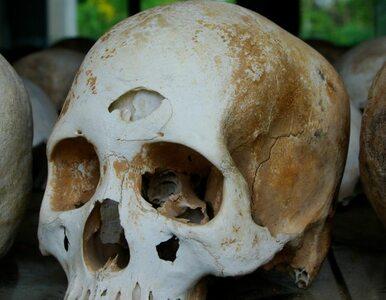 Odnaleziono masowy grób na przedmieściach stolicy