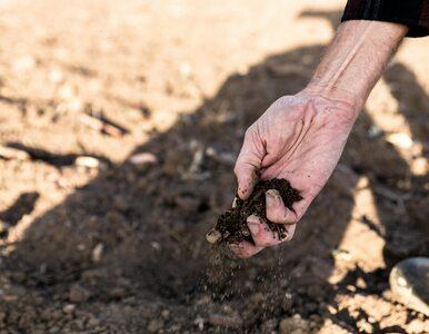 Rząd zapowiada pomoc dla rolników. Rekompensaty wyniosą nawet 1 tys. zł...