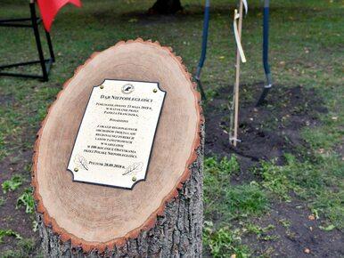 Pomnik ze ściętego drzewa na Święto Lasu? Internauci kpią z ministerstwa