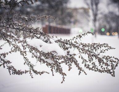 Sylwester z opadami deszczu ze śniegiem