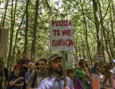 Polska może uniknąć kar za wycinkę drzew w Puszczy Białowieskiej