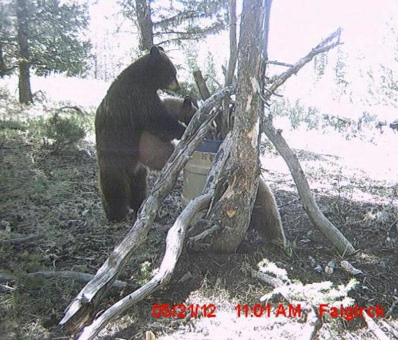 Mały niedźwiadek potrzebował pomocy