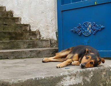 Kielce wydadzą 700 tysięcy złotych na bezdomne zwierzęta