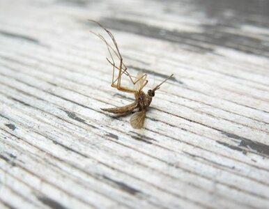 Komary terroryzują Dallas. Władze wprowadzają stan wyjątkowy