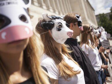 Protest pod Ministerstwem Rolnictwa. To element globalnej akcji